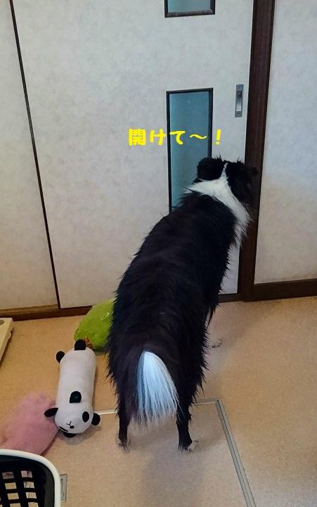 s-_20161029_193012.jpg