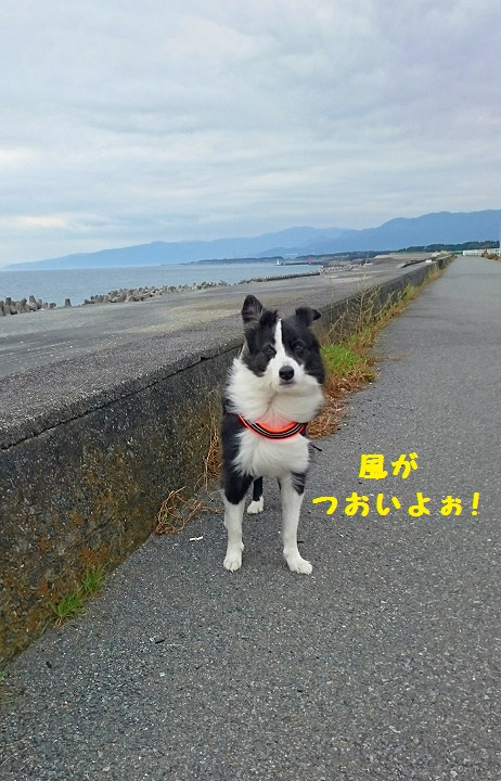 s-_20161030_170314.jpg