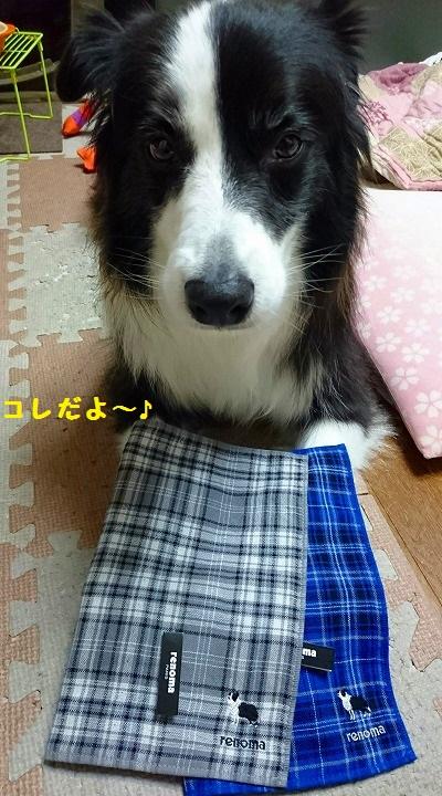 s-_20161101_203609.jpg