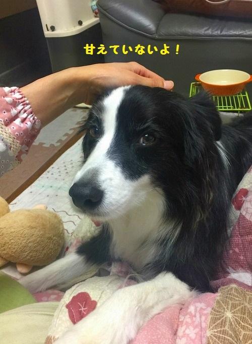 s-_20161102_210125.jpg