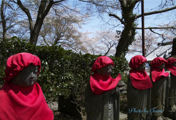 霊園の桜-16