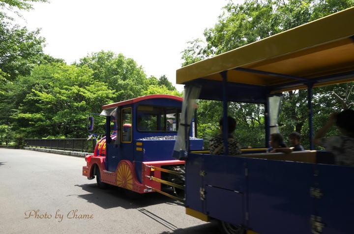 昭和記念公園-899
