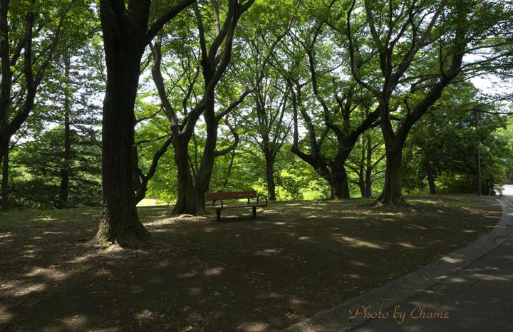 昭和記念公園-897