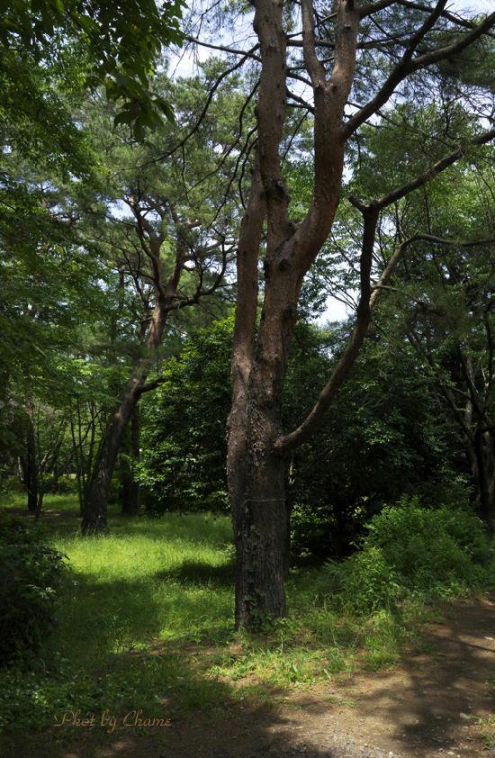 昭和記念公園-900