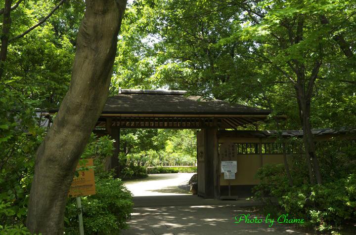 昭和記念公園-905