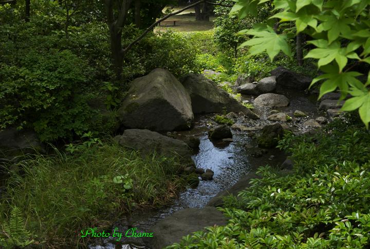 昭和記念公園-915