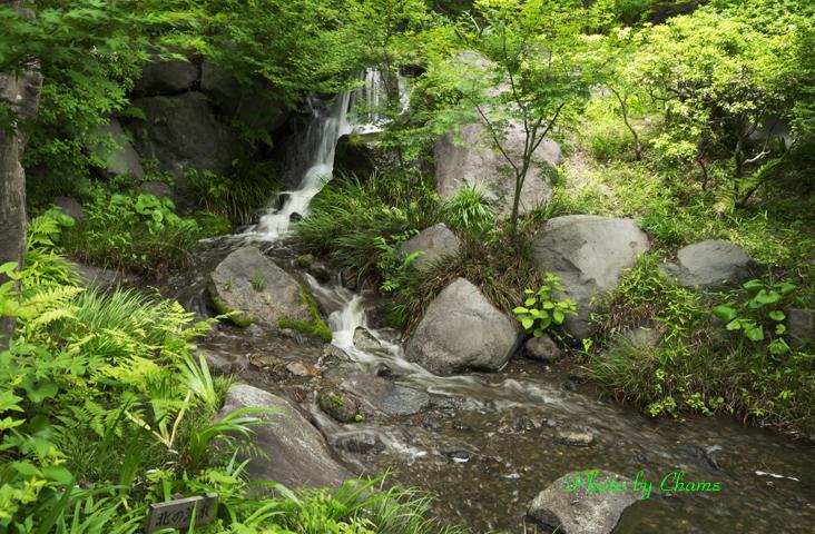 昭和記念公園-938