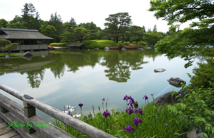 昭和記念公園-945