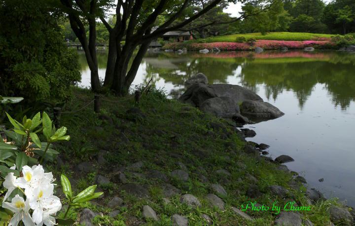 昭和記念公園-929