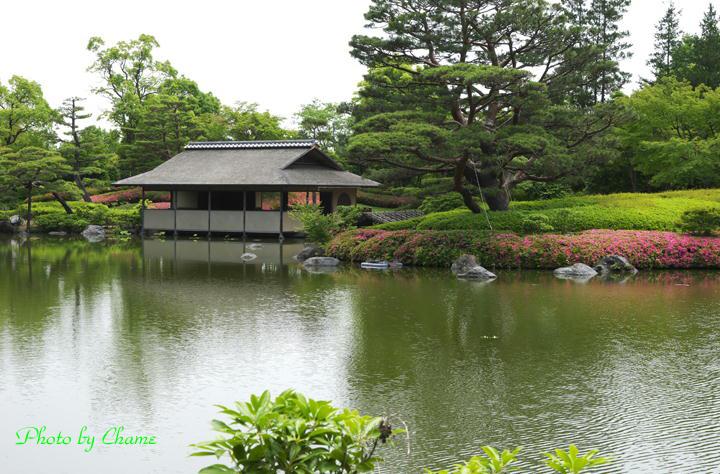 昭和記念公園-935