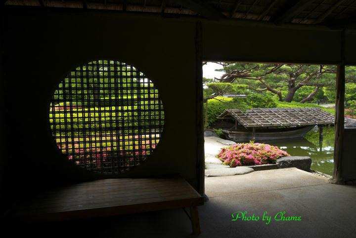 昭和記念公園-957