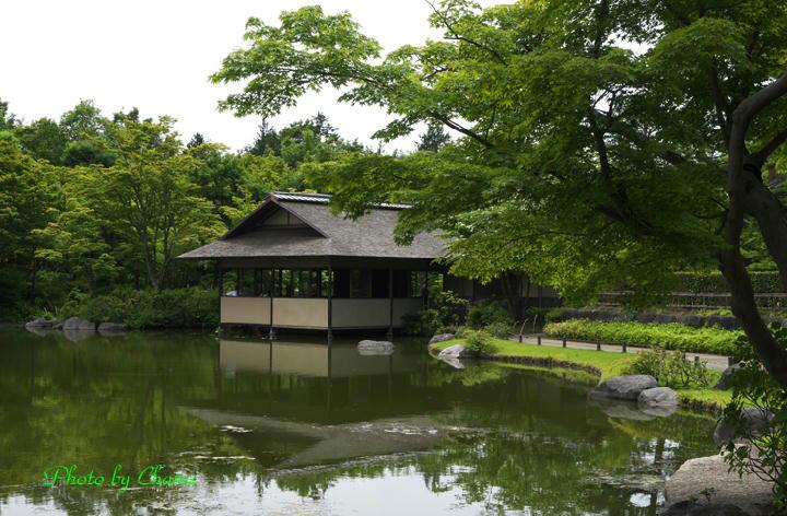 昭和記念公園-925