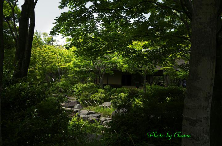 昭和記念公園-963