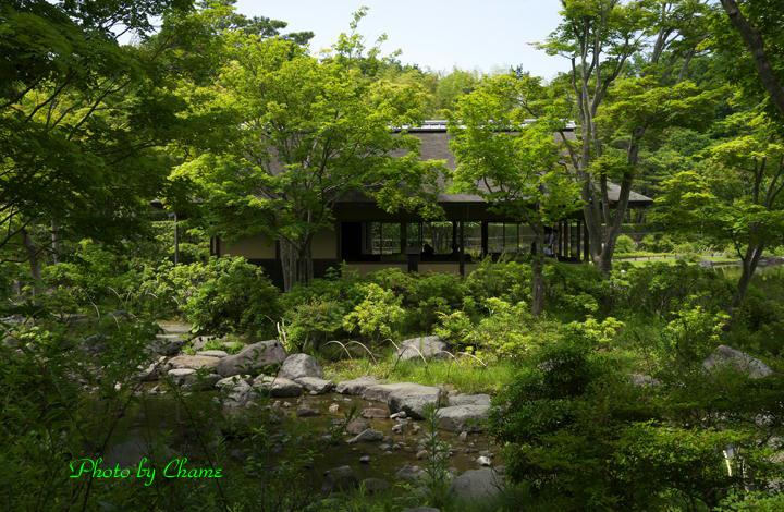 昭和記念公園-964