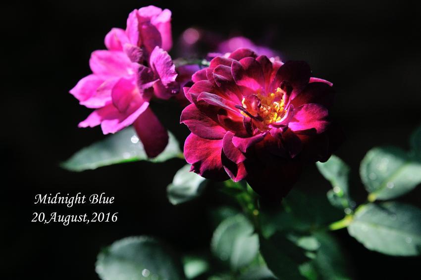 DSC_2195-L_convert_20160820150246.jpg
