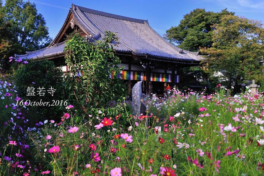 DSC_3489-2-L_convert_20161017092616.jpg