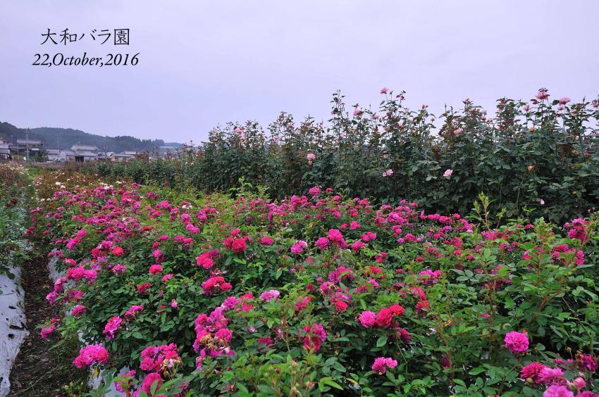 DSC_3934-L_convert_20161024155607.jpg