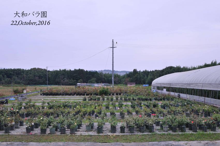 DSC_3936-L_convert_20161024155617.jpg