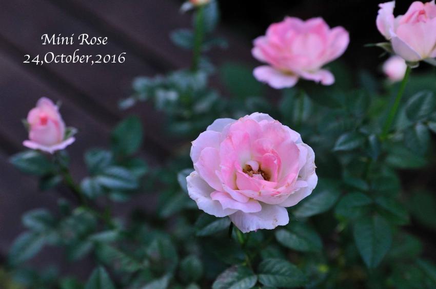 DSC_3966-L_convert_20161024160159.jpg