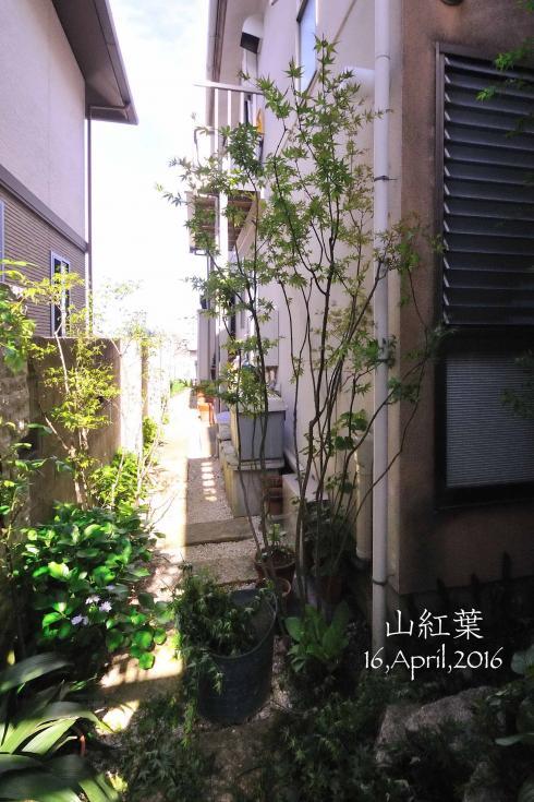 DSC_5174-L_convert_20160421130425.jpg