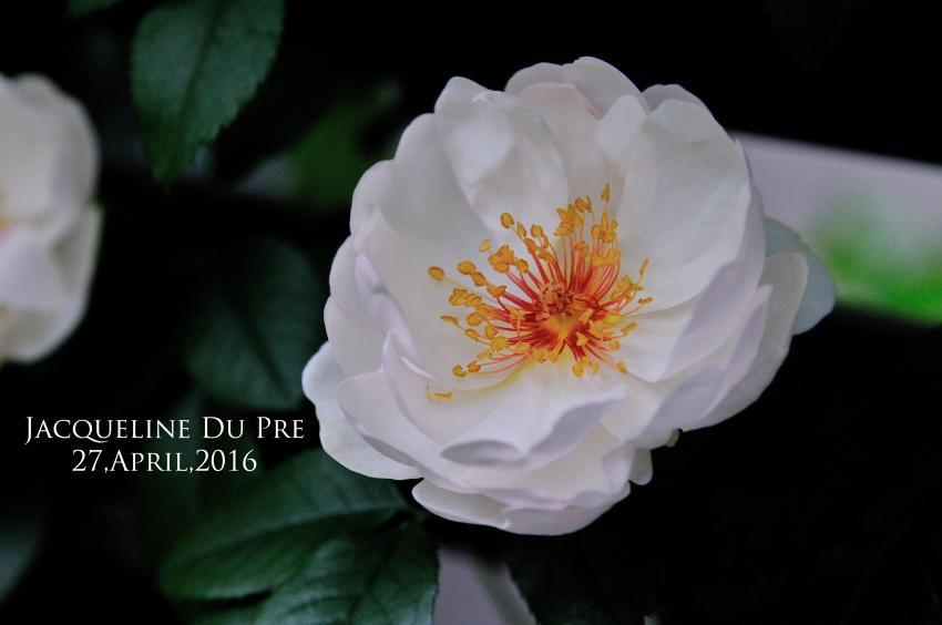 DSC_5842-L_convert_20160803223338.jpg
