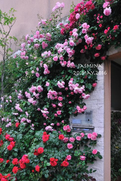DSC_9818-L_convert_20160803223959.jpg