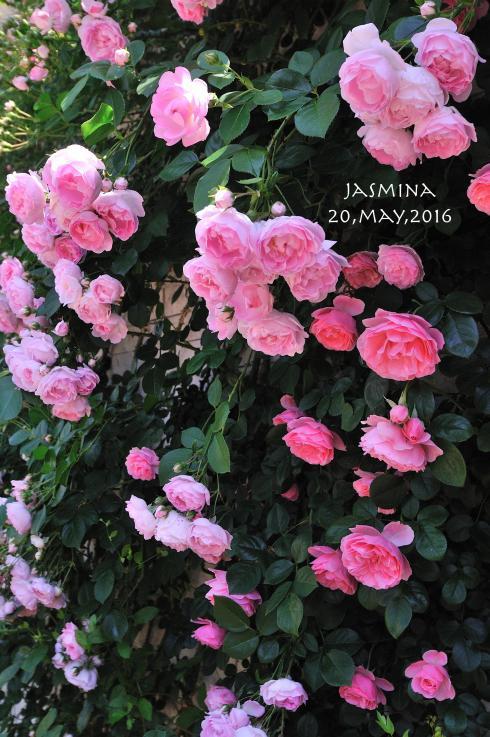 DSC_9910-L_convert_20160803224048.jpg