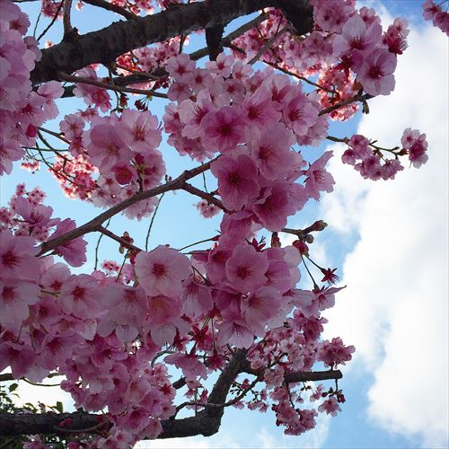ゆうブログケロブログ花見と春 (3)