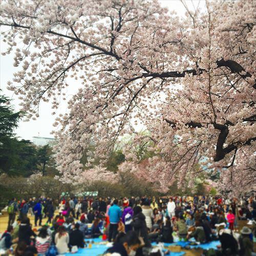 ゆうブログケロブログ花見と春 (4)