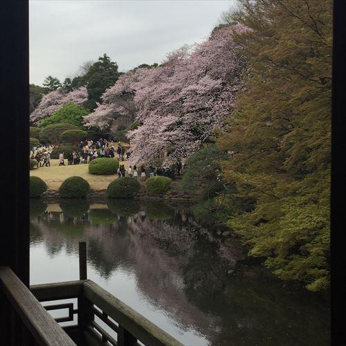 ゆうブログケロブログ花見と春 (8)