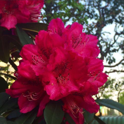 ゆうブログケロブログ花見と春 (16)