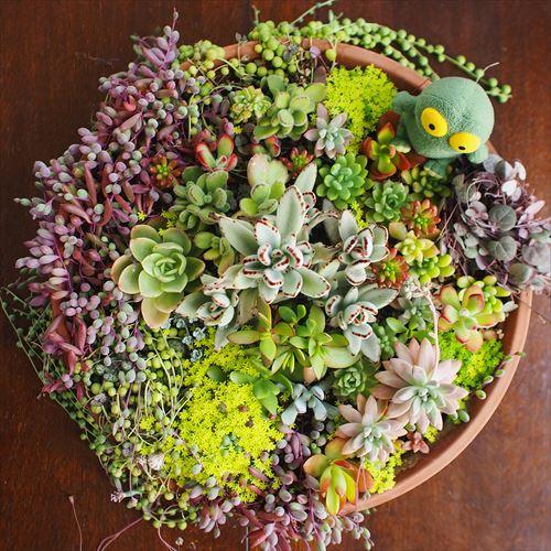 ゆうブログケロブログ花見と春 (19)