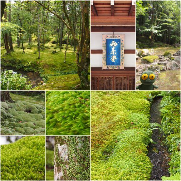 ゆうブログケロブログ京都2016(34)