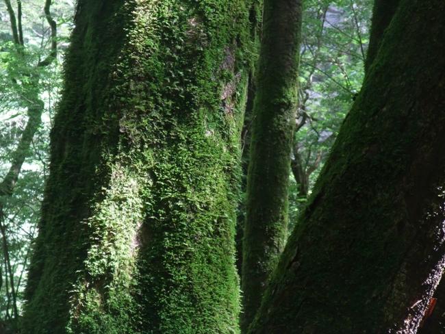 面河渓の森