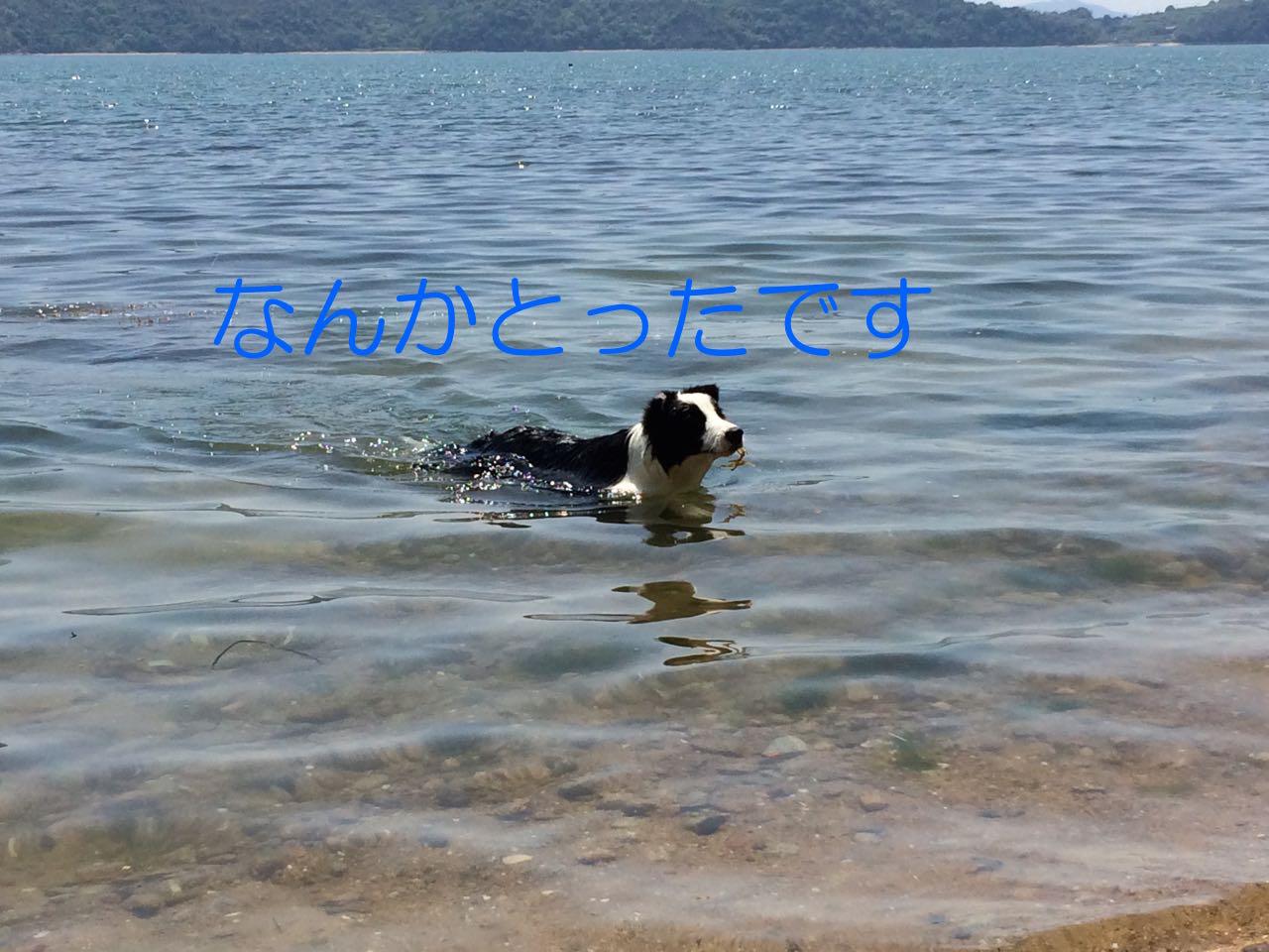 IMG_1729.jpg