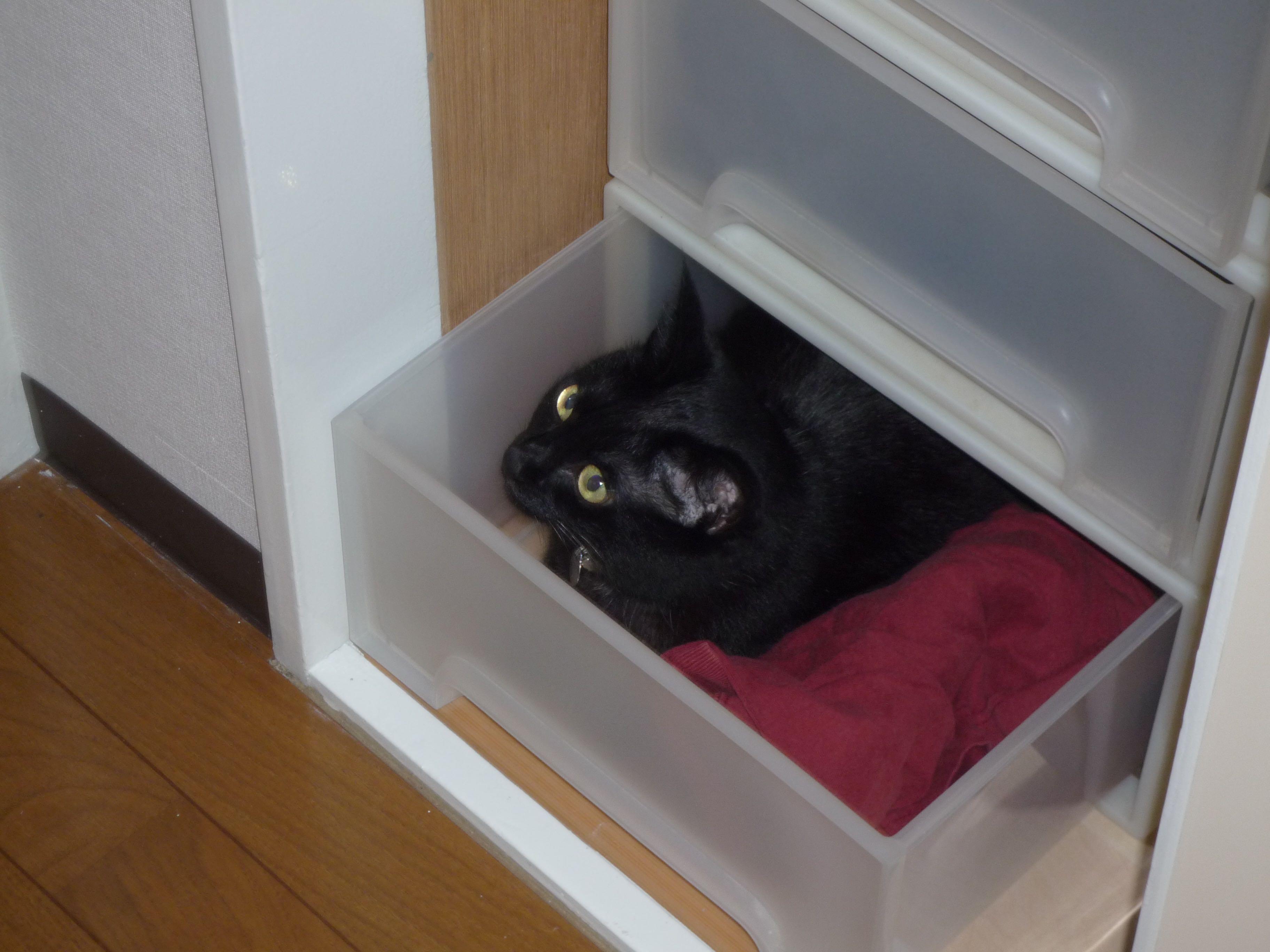 黒猫20160524
