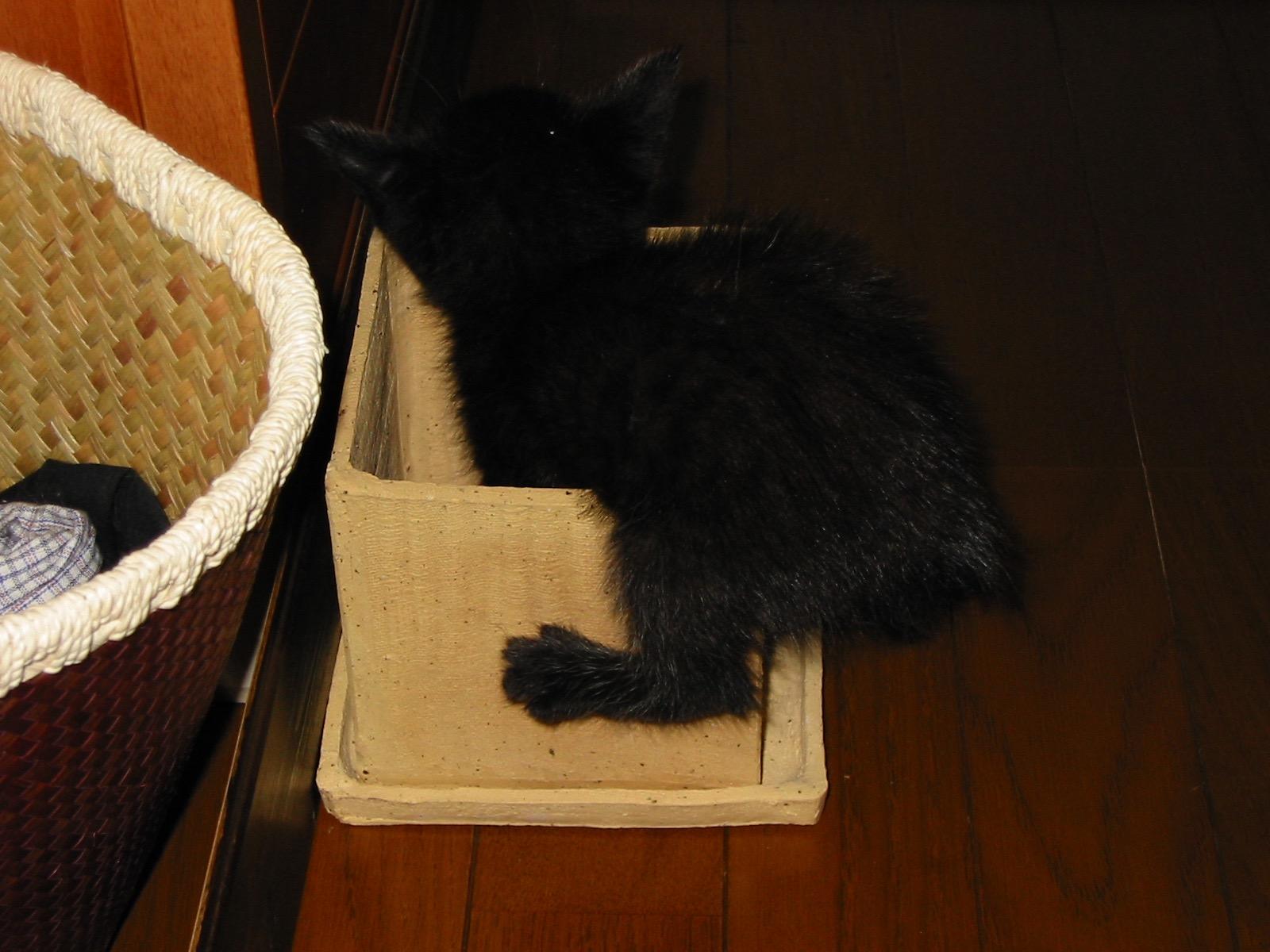 黒猫子猫15年前1