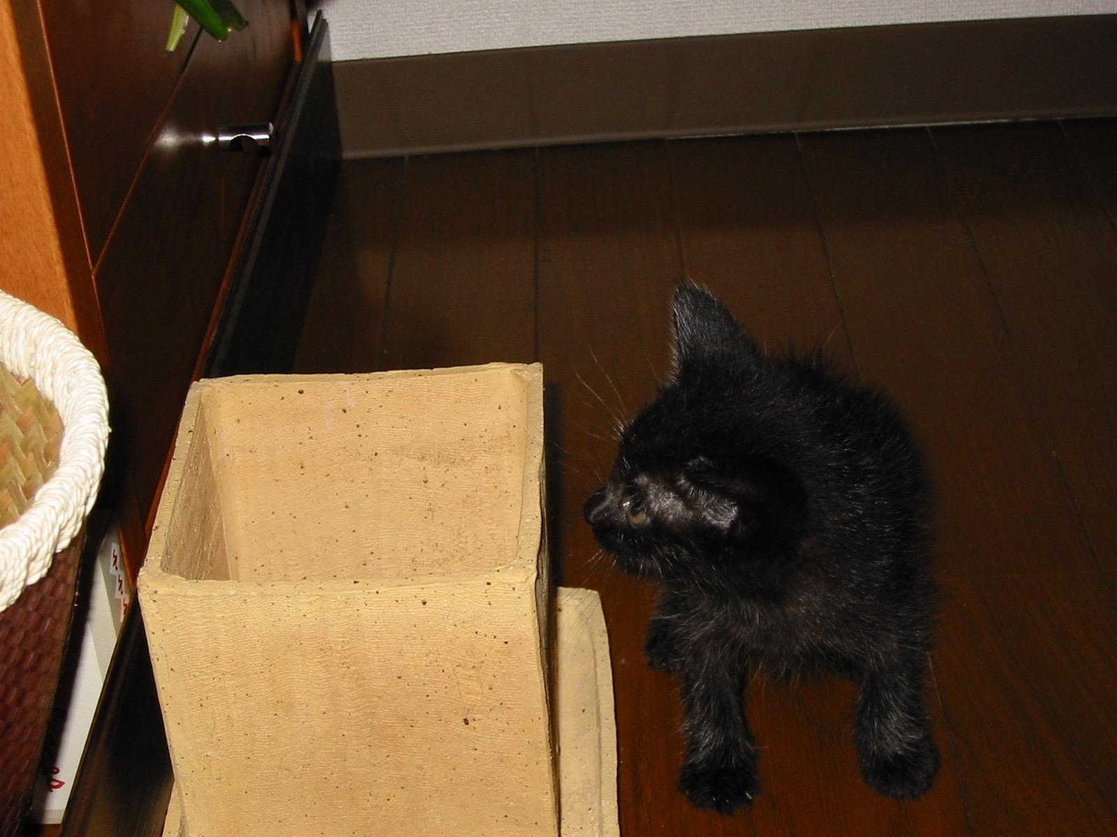 黒猫子猫15年前2