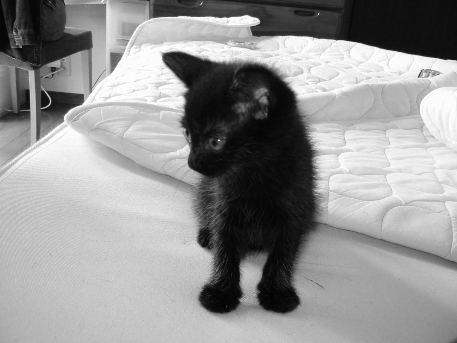 黒猫 0歳.