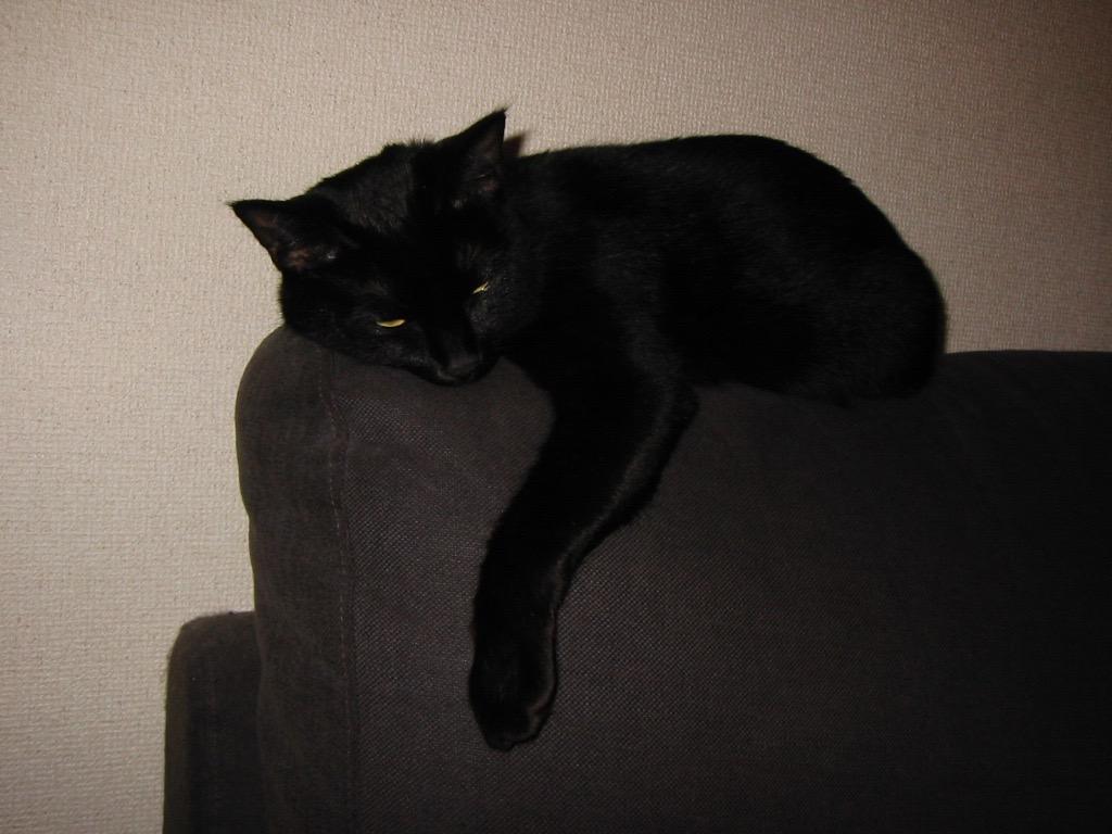 黒猫 2歳.