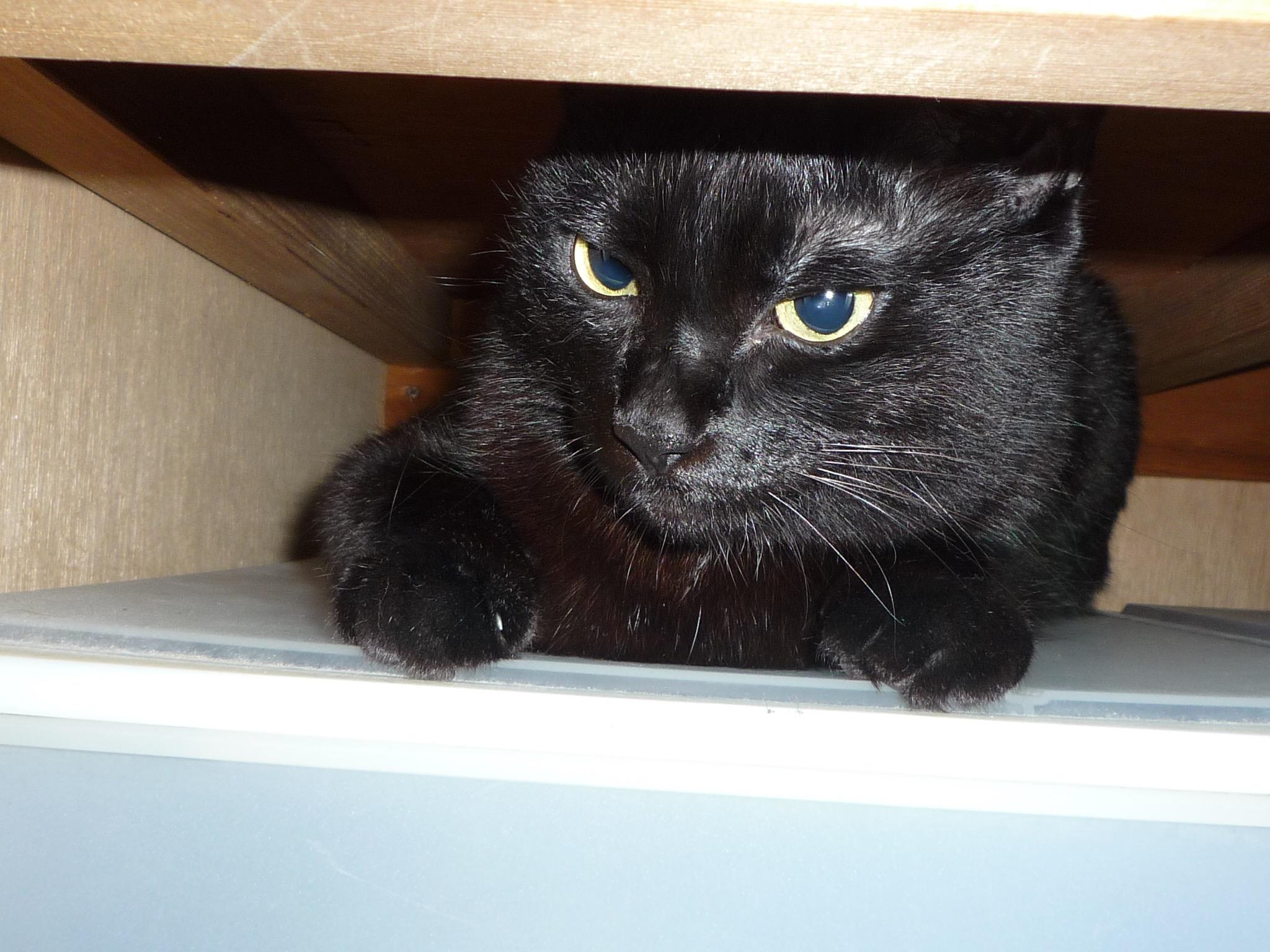 黒猫 9歳