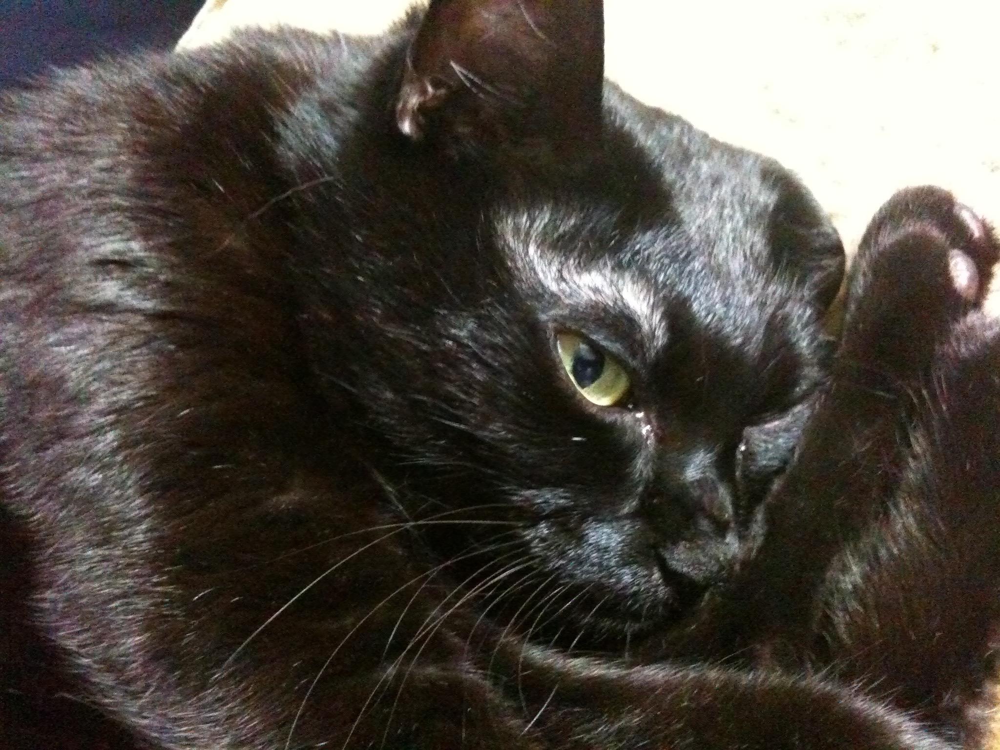 黒猫 10歳