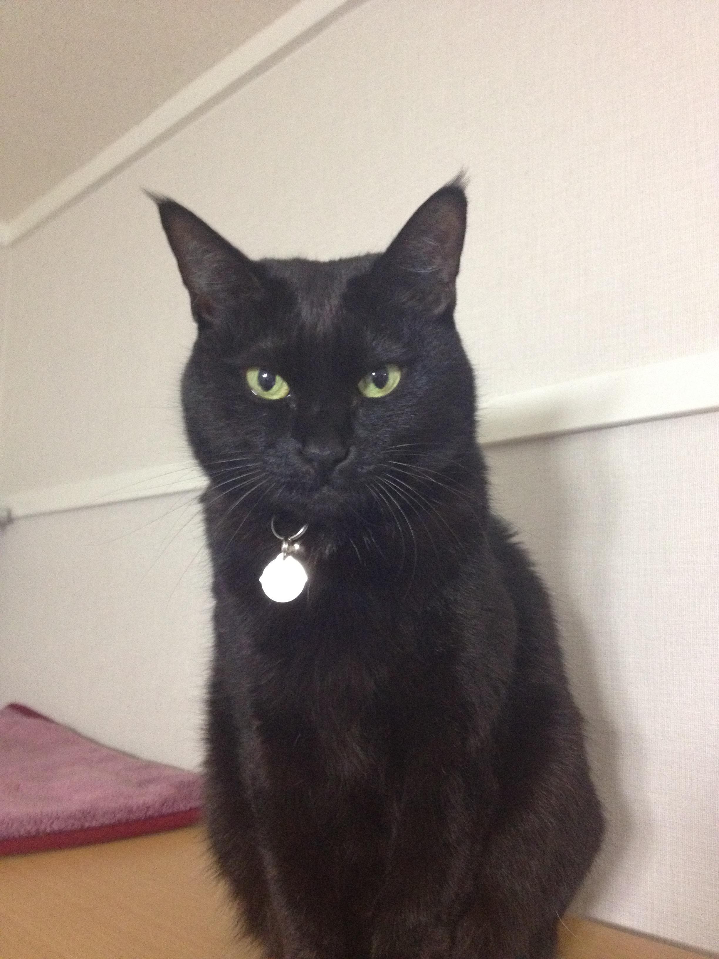 黒猫 11歳.
