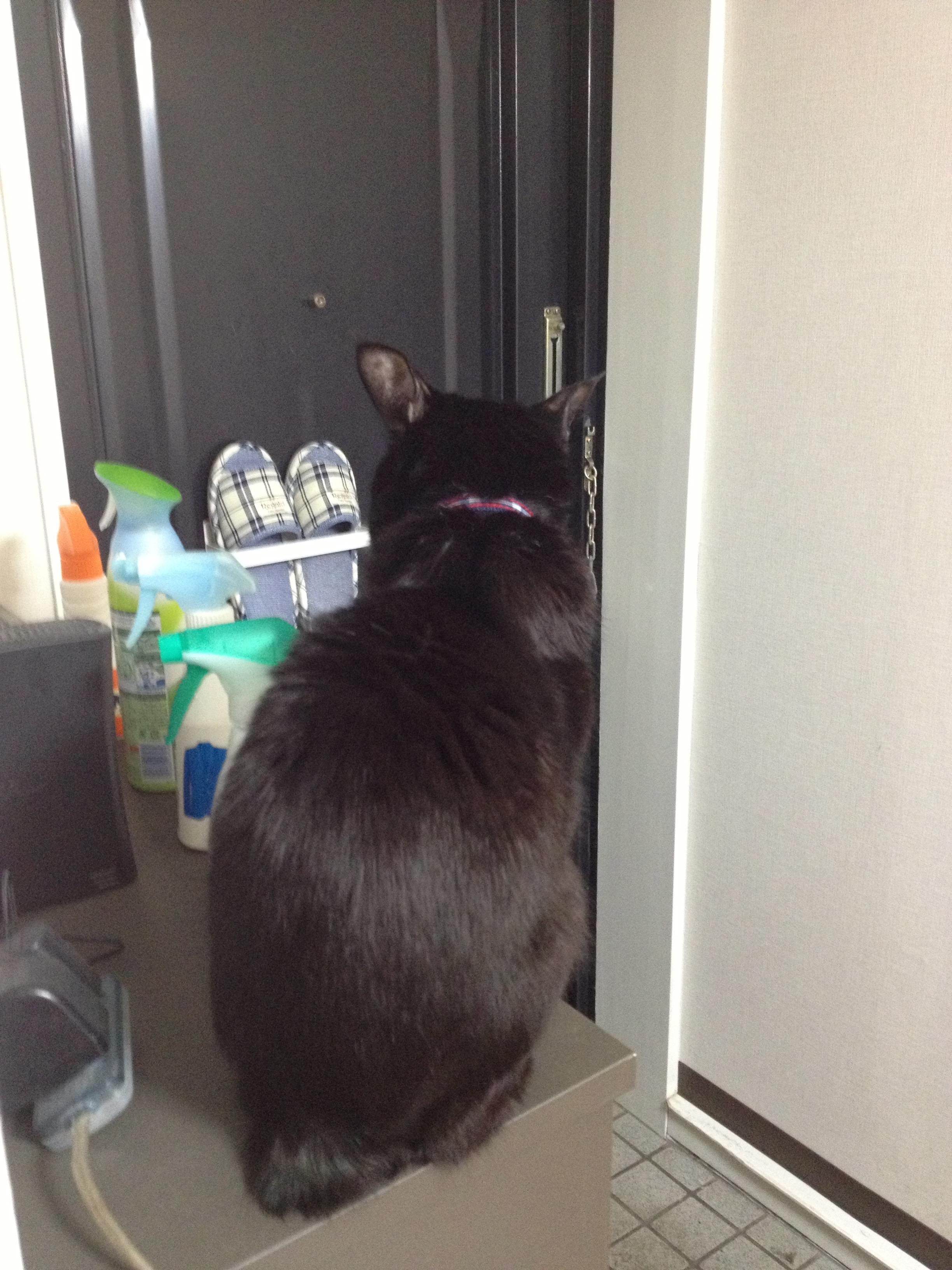 黒猫 12歳.