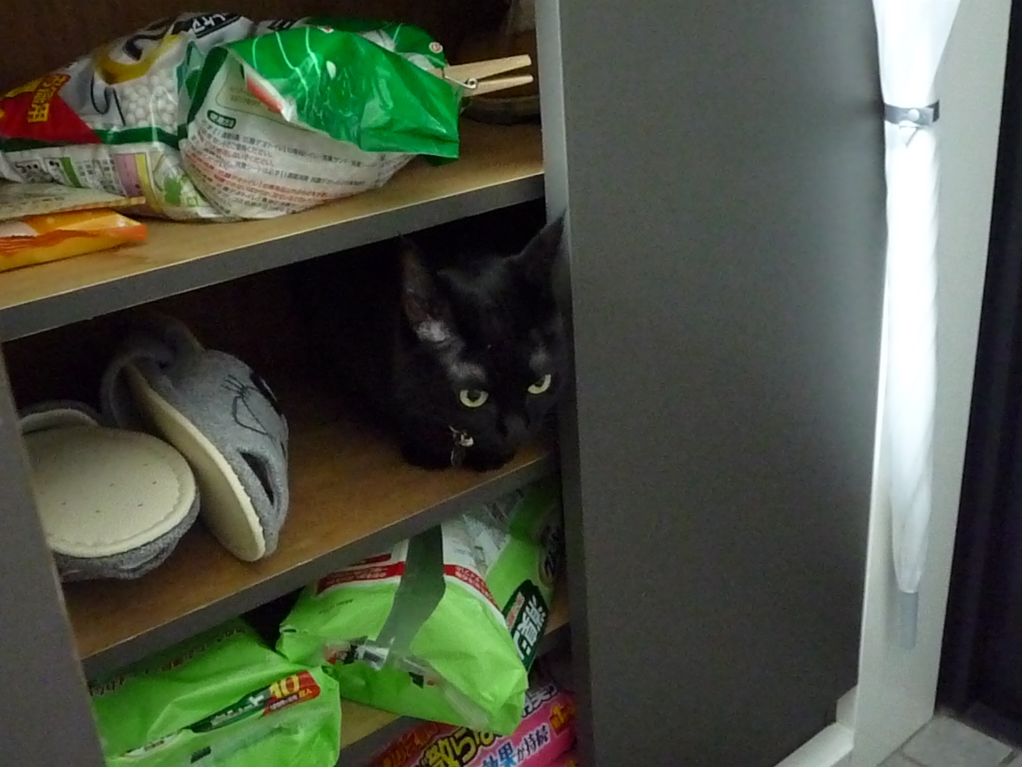 黒猫 3年1ヶ月