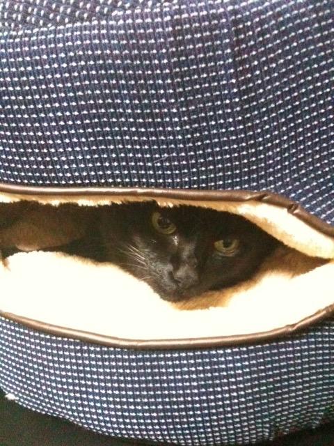 黒猫 秘密基地3