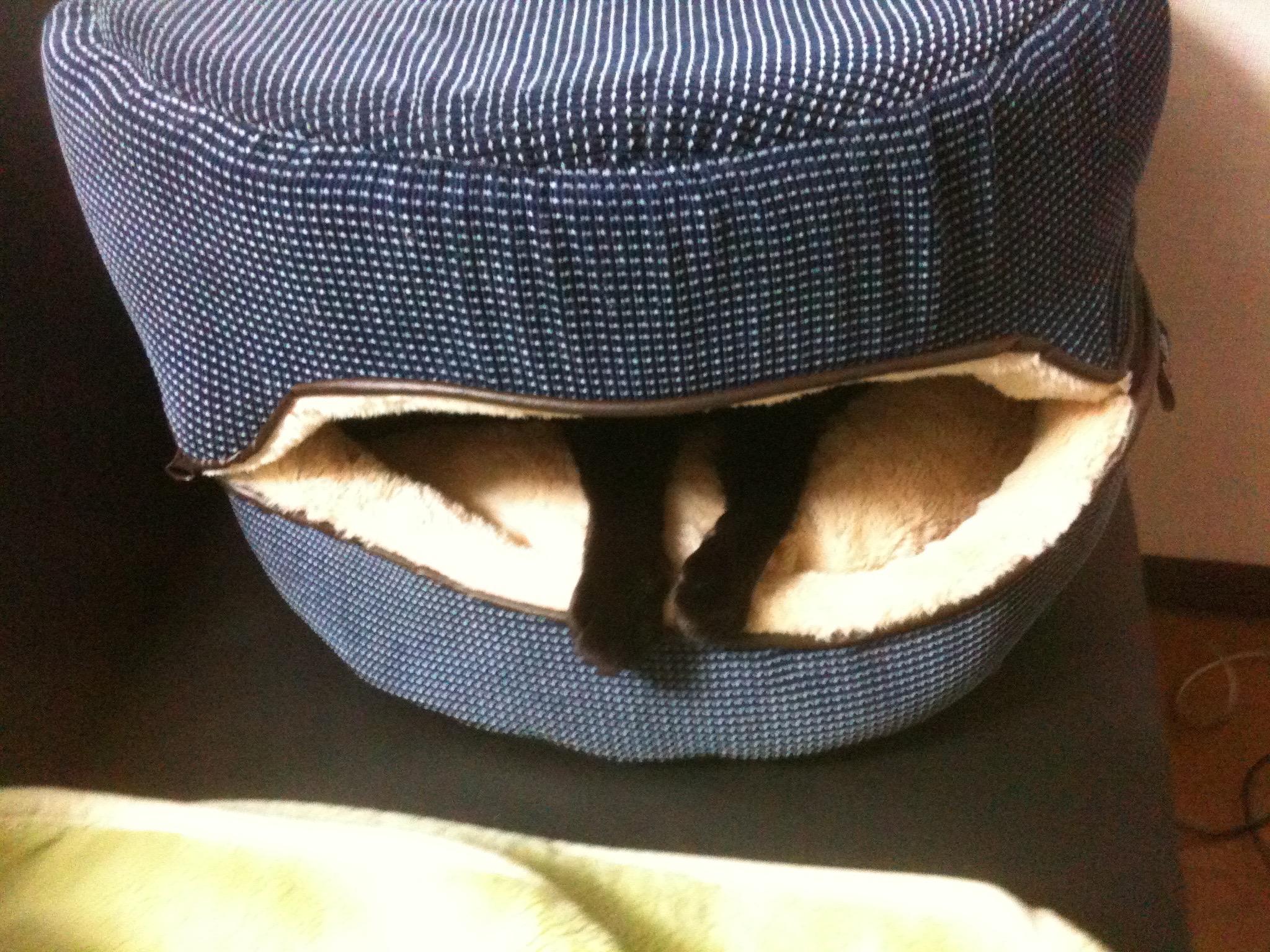 黒猫 秘密基地2