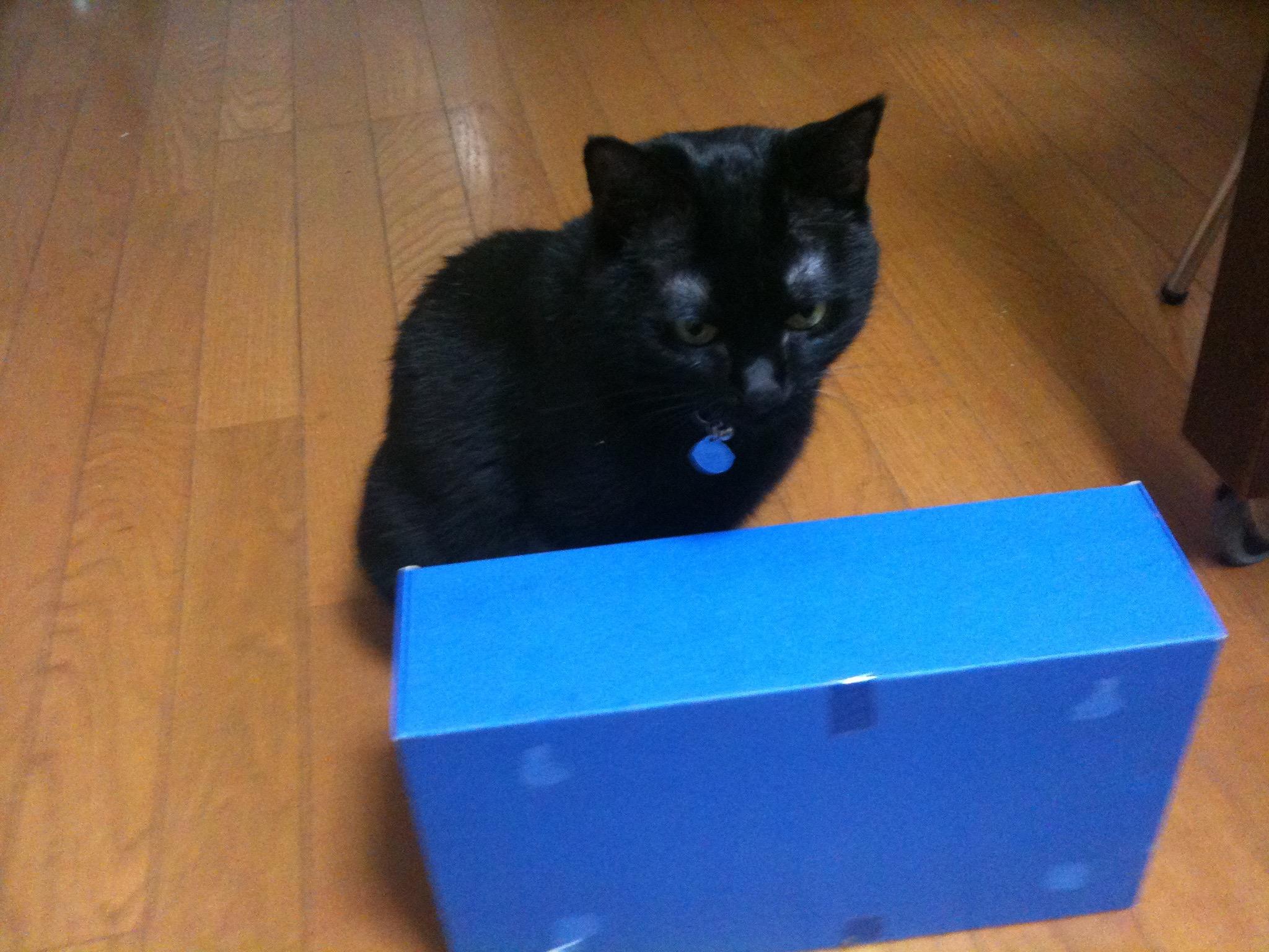 黒猫 箱入り娘1