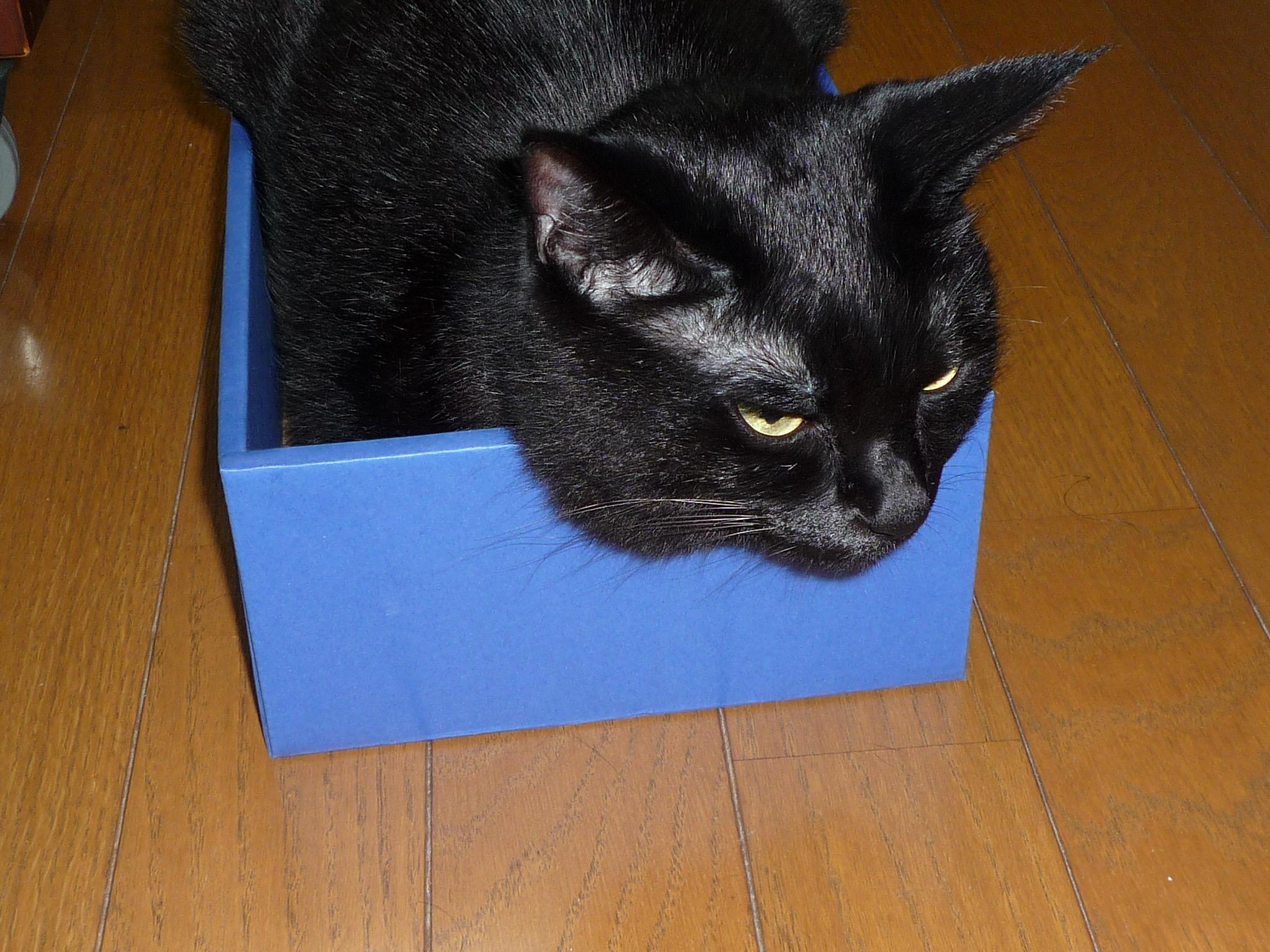 黒猫 箱入り娘3