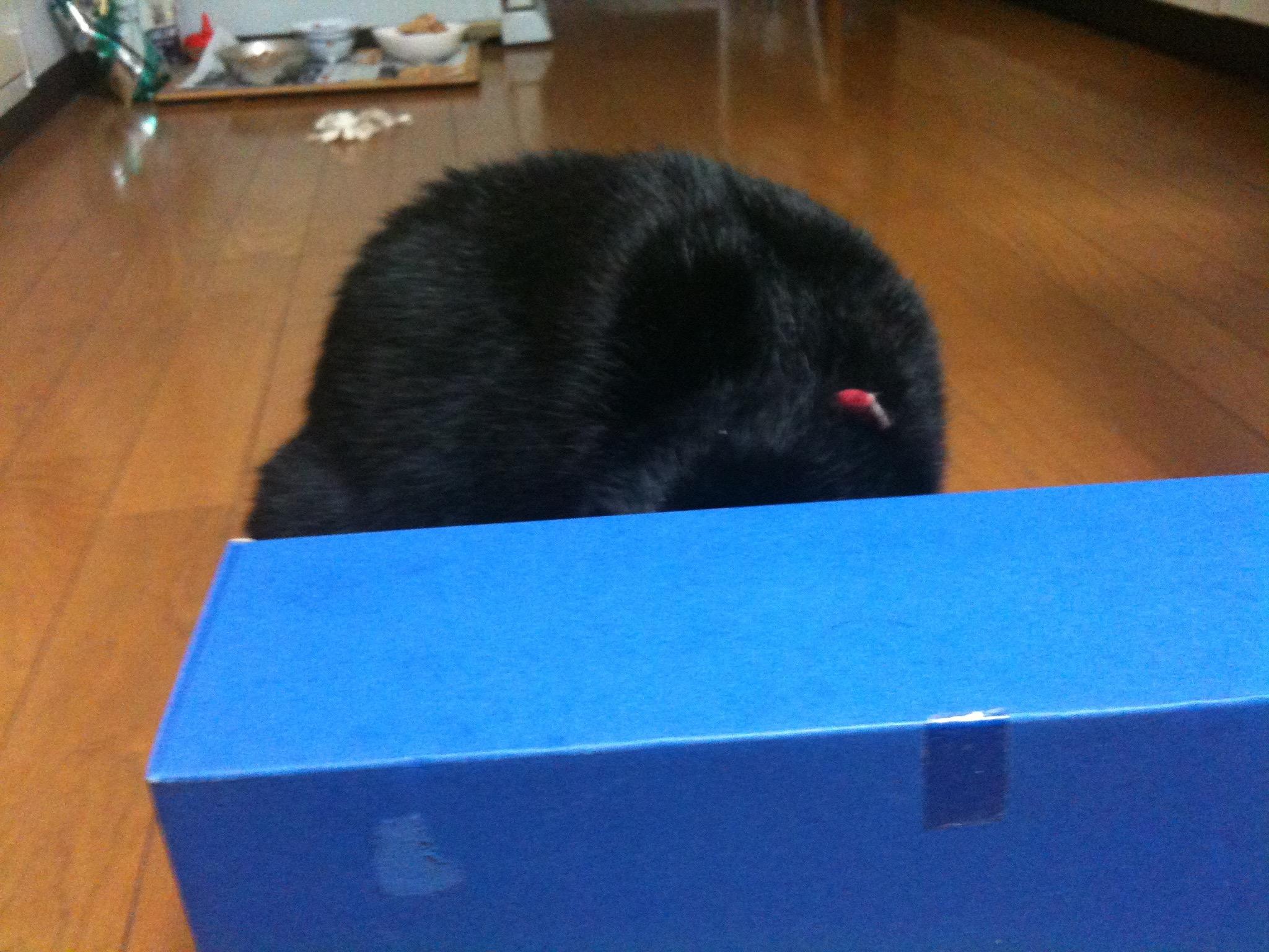 黒猫 箱入り娘2